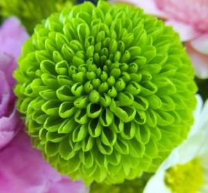 Flowers Buffalo, NY